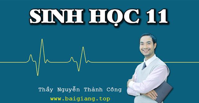 [Hocmai] SINH HỌC 11 - Thầy Nguyễn Thành Công