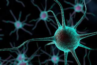 System saraf yang menulis ulang kenangan Traumatis