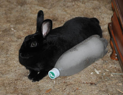frozen bottle for rabbits