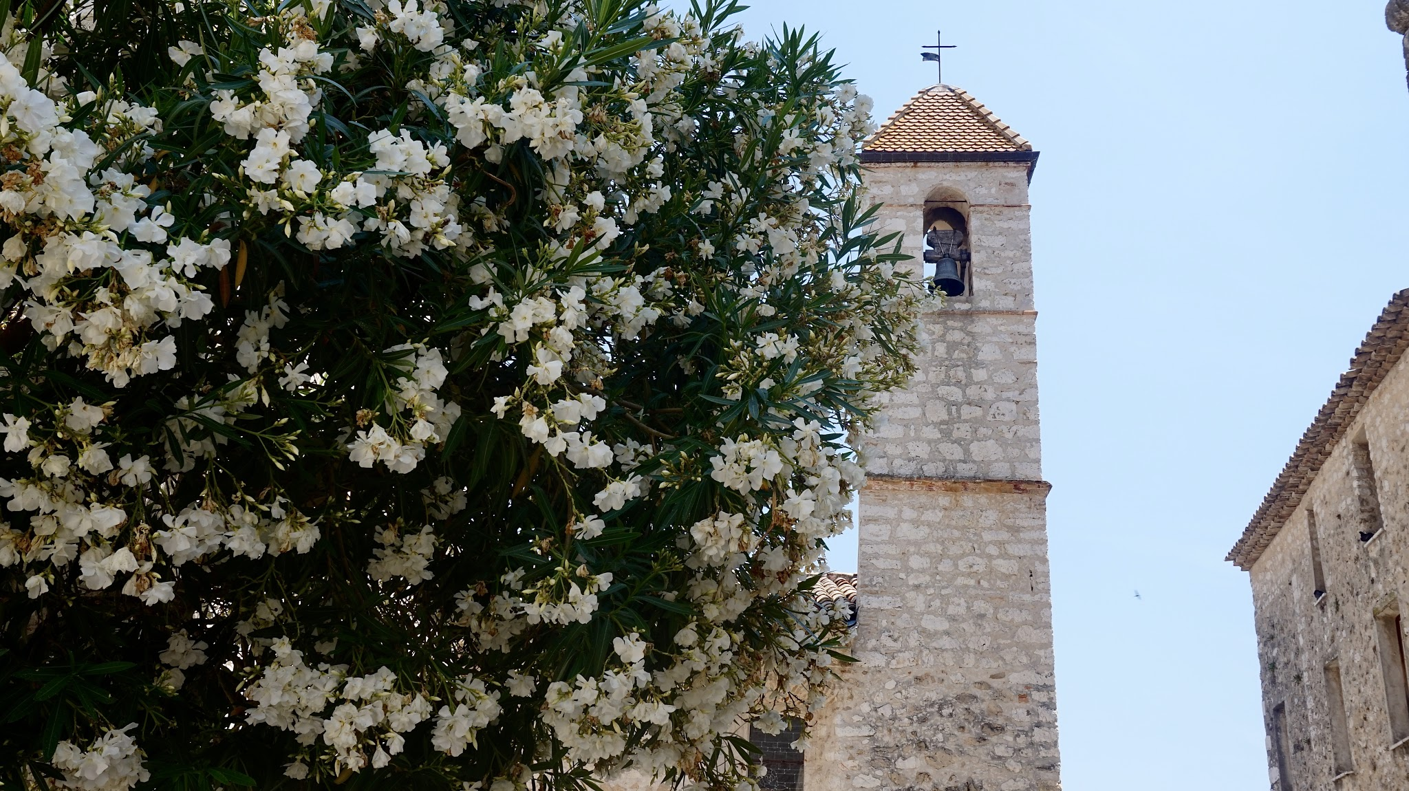 in the foreground white flowers on a green bush, in the background a stone church tower