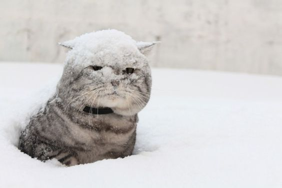 Beautiful winter scene with funny cat in snow