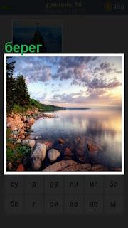 камни и растительность на берегу водоема