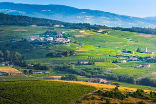 The History and Role of Wine Cooperatives
