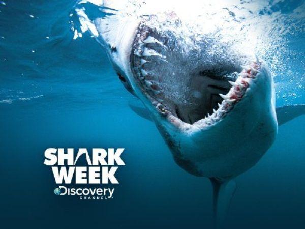 Discovery Shark HD - Hotbird Frequency