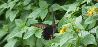 Thung Nham Bird Garden.