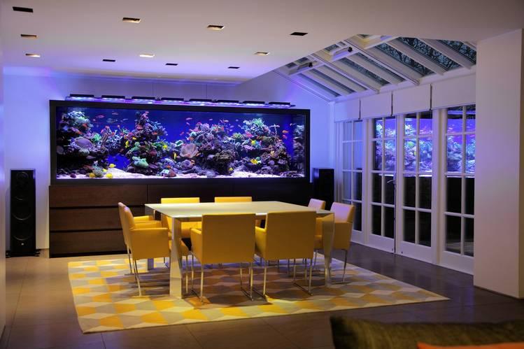 Marzua los mejores consejos para decorar con acuarios - Peceras en casa ...