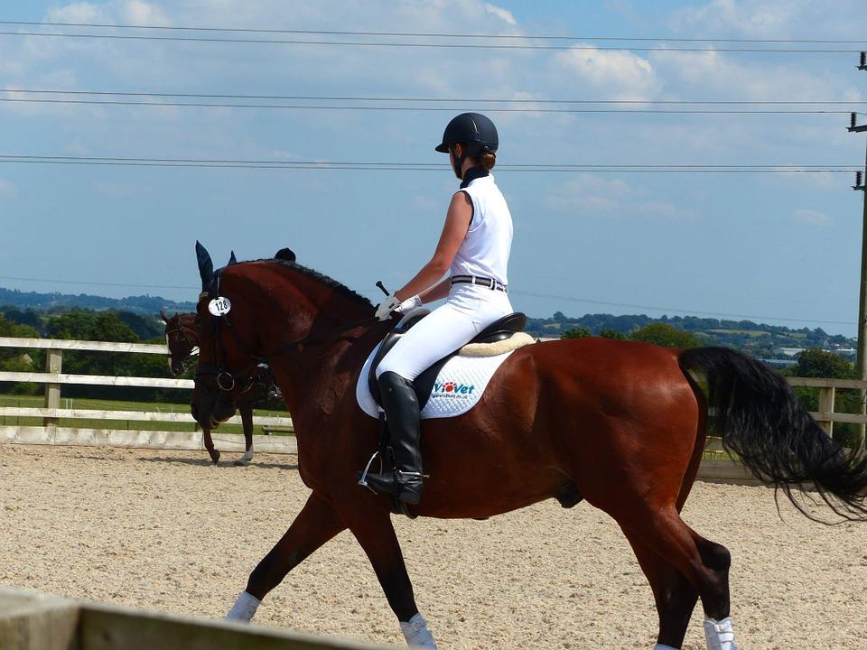 Horse Riding Instructo