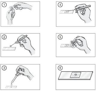 Cara membuat preparat sayatan basah yang sederhana