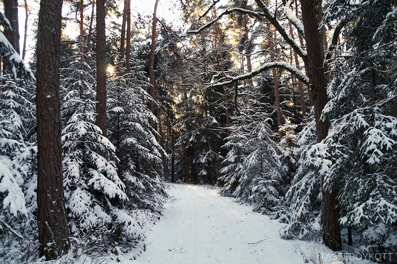 Sunny snowy winter road in the forest