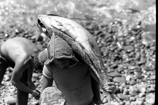 captura y transporte del atun