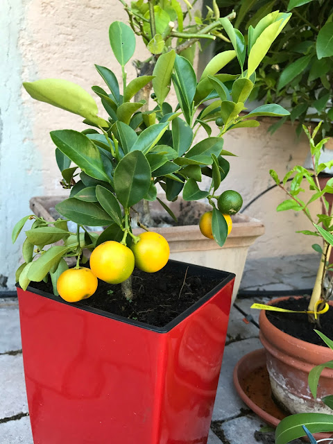 Mini-Orange (c) by Joachim Wenk