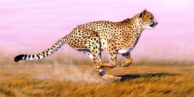 Cheetah, hewan paling cepat di dunia, hewan tercepat didunia http://iboqq.com