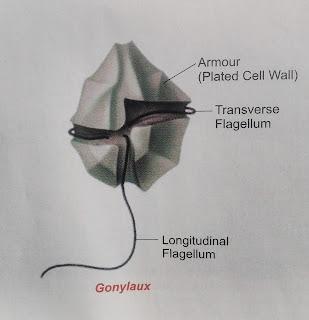 Gonyalux plant diversity