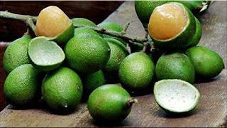 gambar buah quenepa