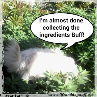 Fluffy collecting delicious meal ingredients.