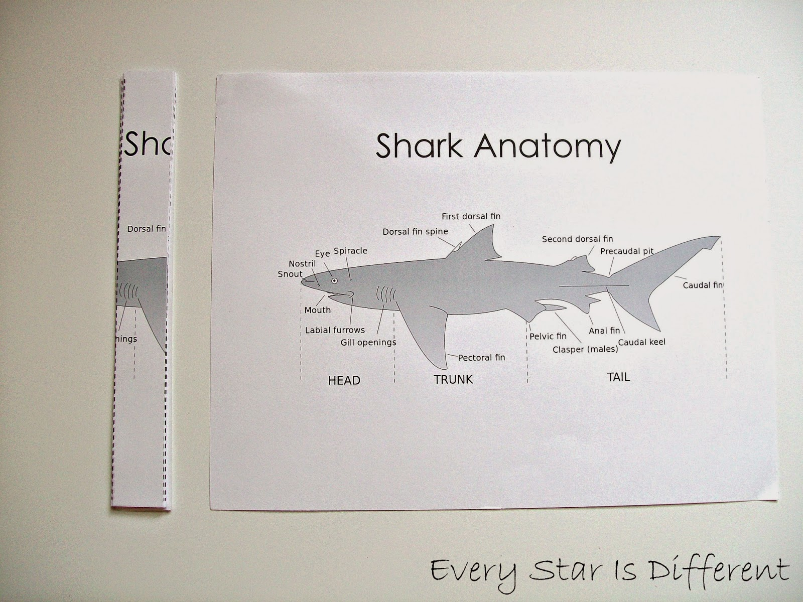 shark dissection guide diagram clipsal rcbo wiring unit with free printables every star is different