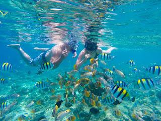 Snorkeling in 3 Gilis
