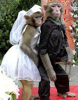 صور خلفيات قرود 2019 انواع القرود مع الصور