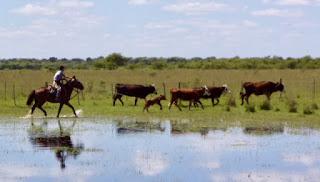 Argentiina, riitta reissaa, horsexplore