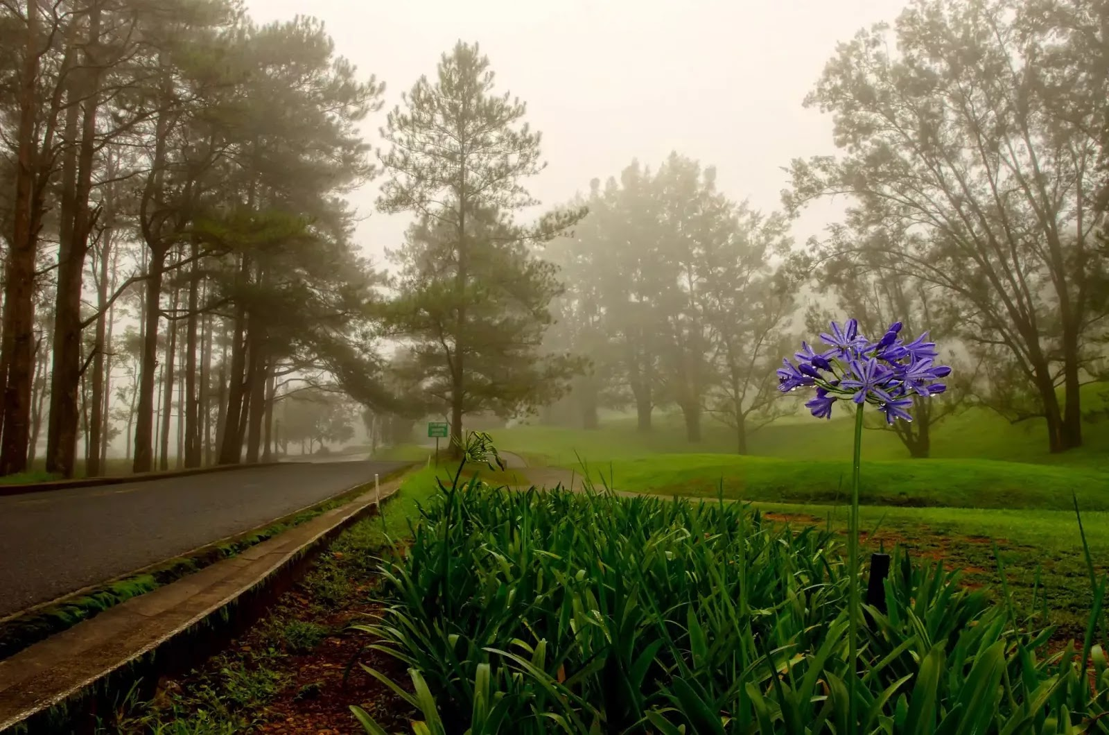 Foggy Day Flora Baguio City Camp John Hay Cordillera Administrative Region Philippines