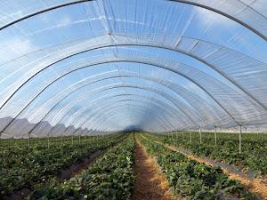 Keunggulan Greenhouse Dengan Plastik Uv Selain Untuk Daerah Budidaya Namun Dapat Untuk Sarana Agrowisata Juga