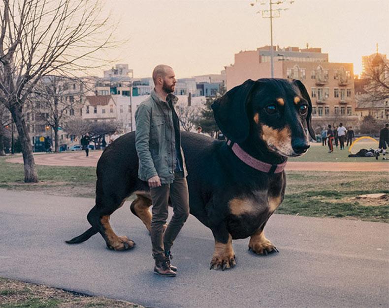 Fotógrafo photoshopea a su minúscula perra para reflejar lo grande que piensa que es