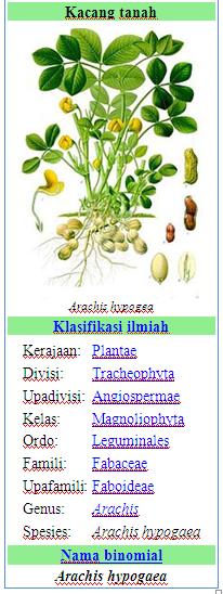 Nama Ilmiah Kacang Tanah : ilmiah, kacang, tanah, Wulandari, Ulan's, Home:, Agustus