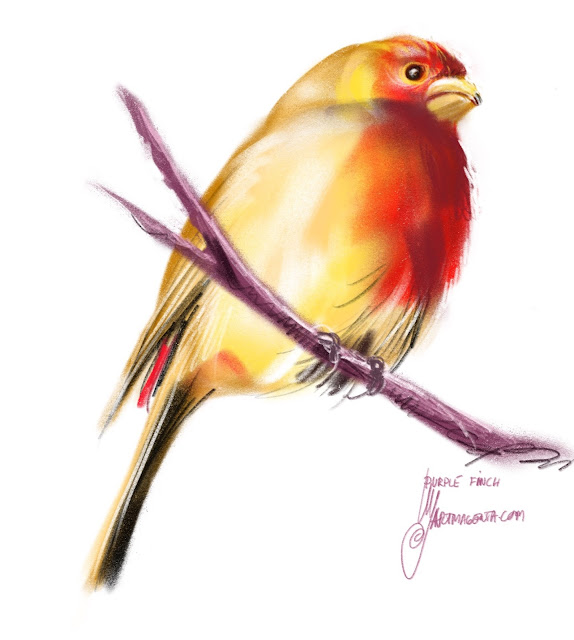 Purple finch a bird painting by Artmagenta