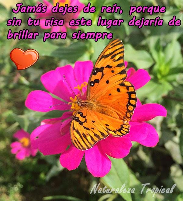 Jamás dejes de reír, porque sin tu risa este lugar dejaría de brillar para siempre. Flor clavelón con mariposa.