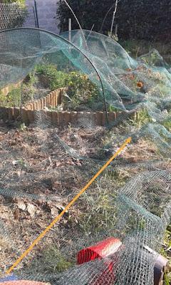 Proteggere l'orto con una rete.
