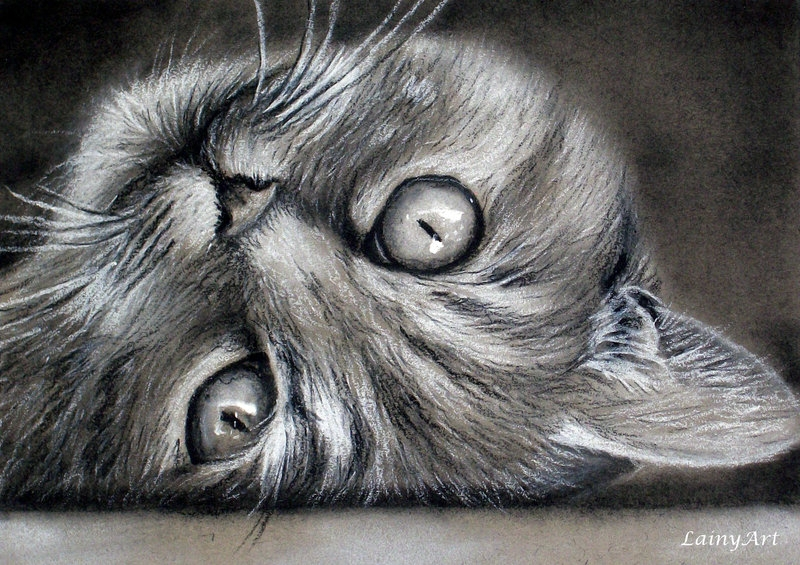 06-Cat-Playing-Alaina-Ferguson-Lainy-Animal-Charcoal-Portrait-Drawings-www-designstack-co