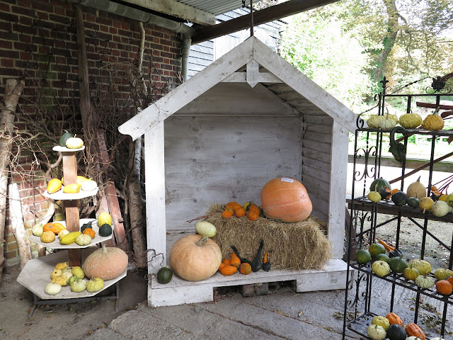 Norpar Barns, Essex, Navestock, things to do essex, pumpkins, ugly pumpkin