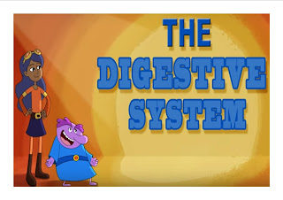 HOW THE DIGESTIVE SYSTEM WORK?