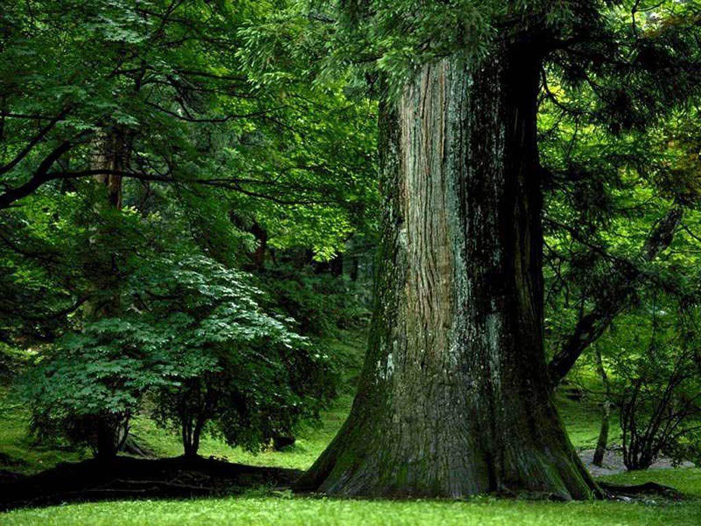 #Florestas, Sistema Ecológico das Florestas