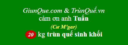 Trùn quế Cư Mgar