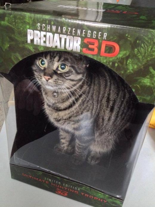 кот в коробке от игрушки