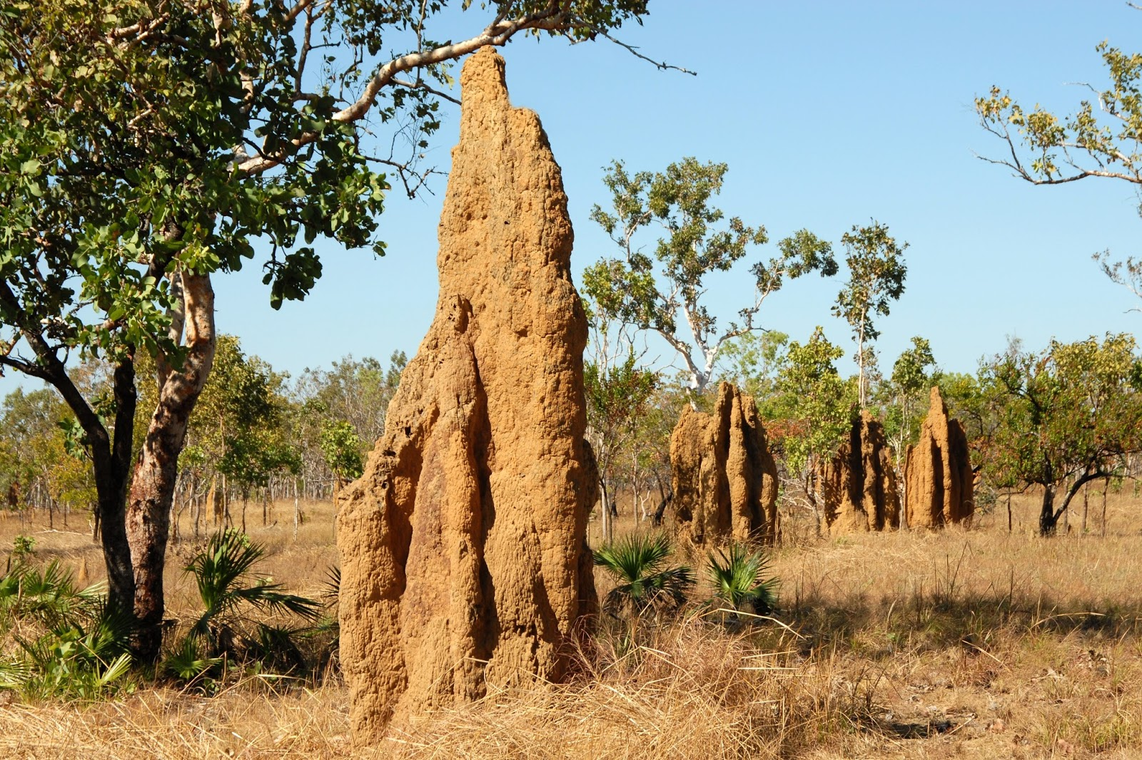 Picture of a termite mound or hill.