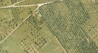 η Περιφέρεια Πελοποννήσου θα καταθέσε αίτηση ακύρωσης των δασικών χαρτών