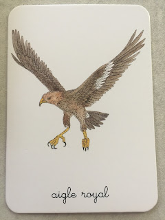 carte animaux aigle royal Mon coffret Montessori des animaux édition Nathan