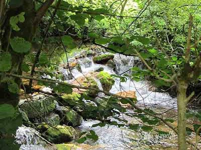 Paseo en el verde asturiano