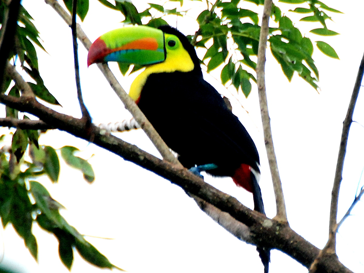 Eric And Beth S Travel Blog Toucans And Rainforest Walk