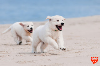 Puppy socialization practices and how they are lacking