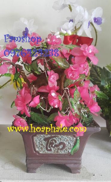Gốc bonsai cây hoa đào tại Hoa Bằng