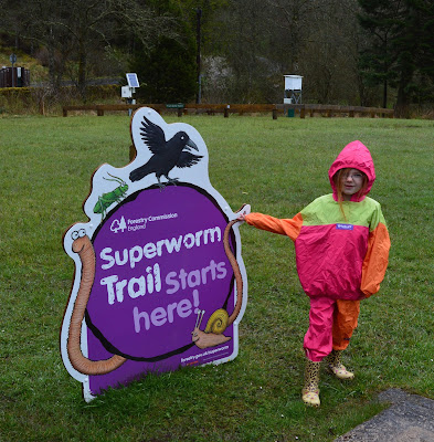 Superworm trail Kielder