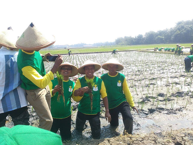 Persatuan Tani Nusantara Tanam Padi Percontohan di Karawang