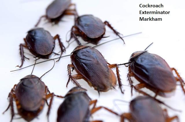 Cockroach Exterminator Markham