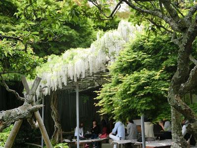 英勝寺の抹茶