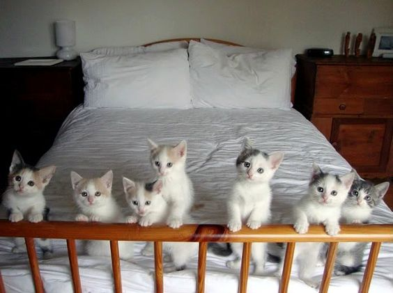 we are ready for bed-time story