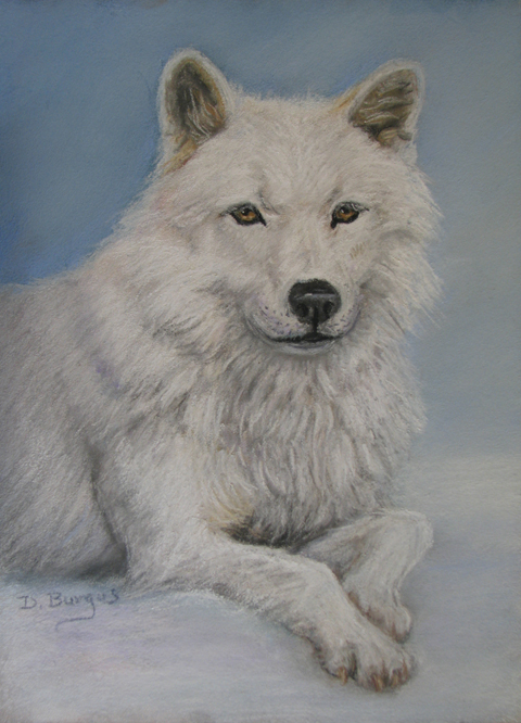 Art Helping Animals Arctic White Wolf Pastel By Della Burgus