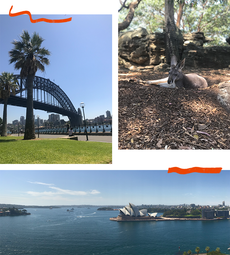 Views of Harbour Bridge Sydney, a Kangaroo at Taronga Zoo, and Sydney Opera House